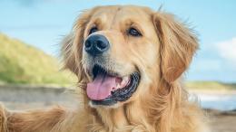 En Arkadaş Canlısı ve Aile Dostu Köpek Cinsleri