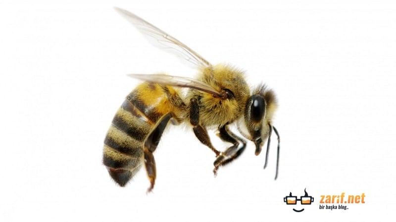 Arılar Dans Eder