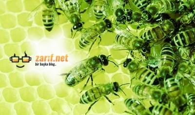 Arılar Hakkında 7 İlginç Bilgi