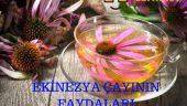 Ekinezya Çayının Faydaları Nelerdir?