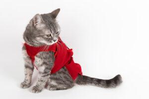 Dişi Kedi Ne Zaman Kısırlaştırılmalı