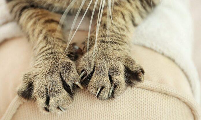 Kedi Tırmalamasına Ne Yapılır