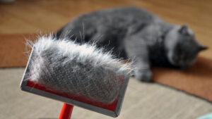 Kedi Tüyü Dökülmesi Nasıl Önlenir