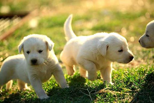 1 Aylık Yavru Köpek Ne Yer