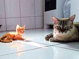 Kedi Yavrusunu Neden Yer